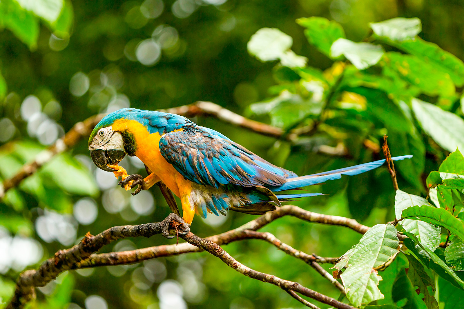 Costa Rica Wildlife Adventure