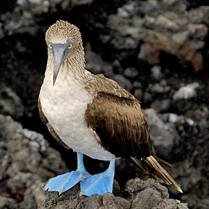 Galapagos-Land based CME