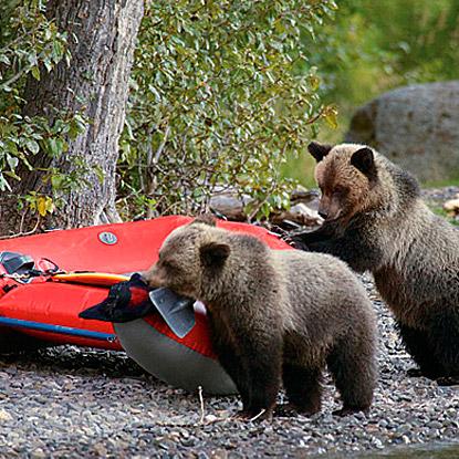 NA-bearcamp