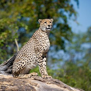 Africa: Custom & Luxury Safaris